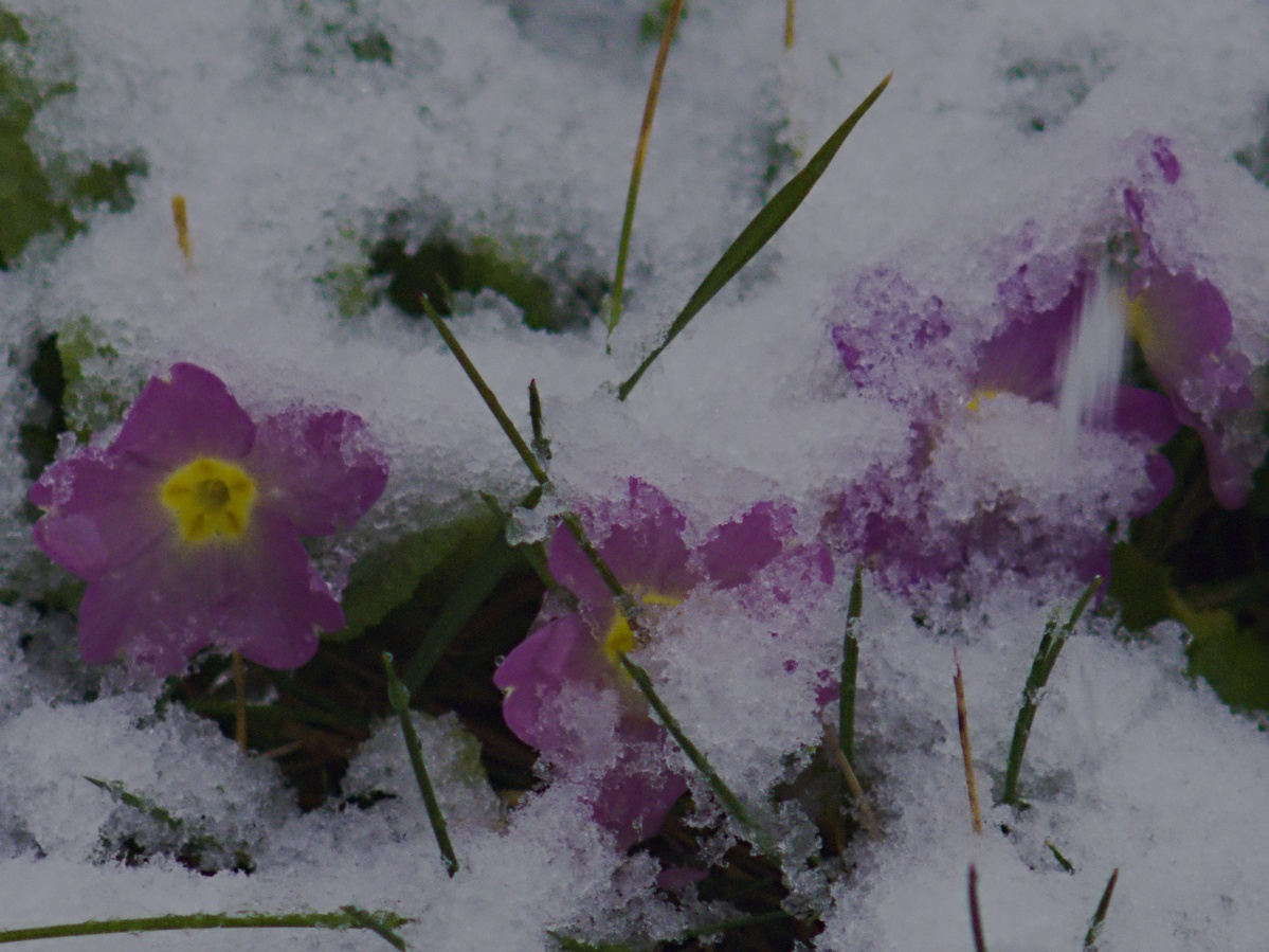 Der erste Schnee des Winters 2019/2020 im Mittleren Neckartal