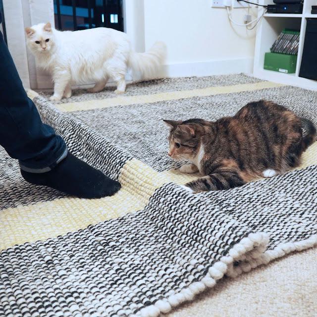 habitat rug and cats