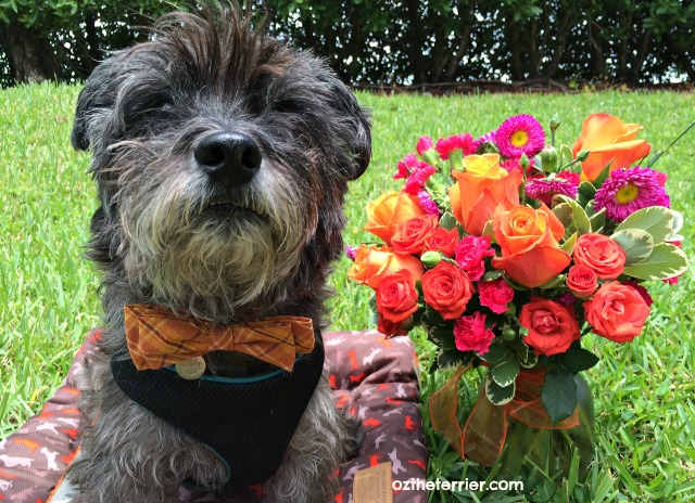 Oz with beautiful orange roses from new friends