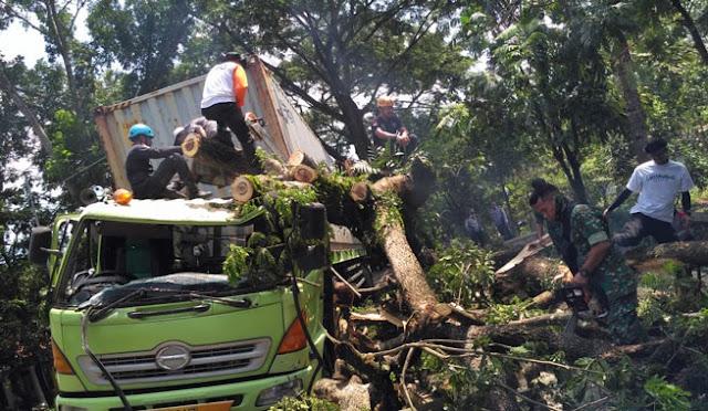 Kondisi truk tronton ketika tertimpa pohon tumbang