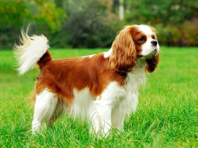 Top Ten Most Expensive Dogs In The World