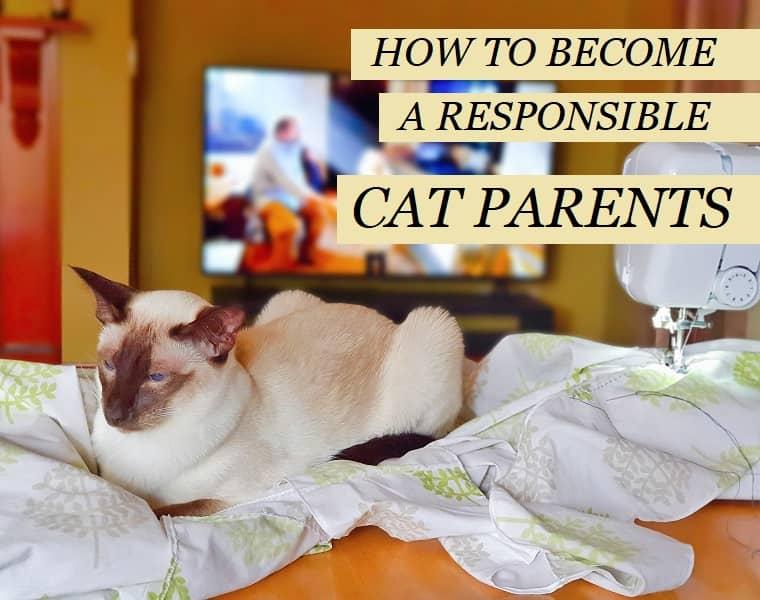 Cat Parenting Guide in Victoria, Australia