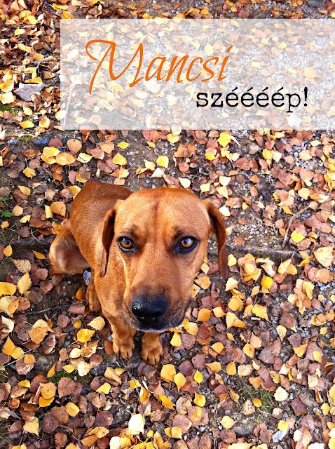 Bemutatom nektek Manó kutyát  f39c1d281c