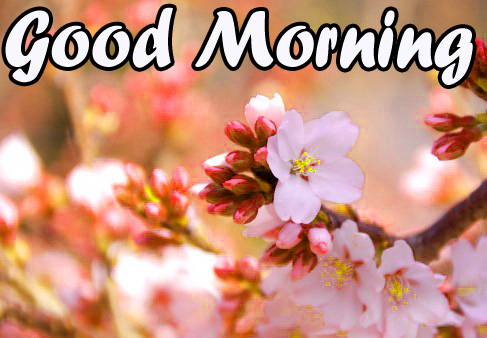 50+ Very Sweet good morning images for whatsapp free download