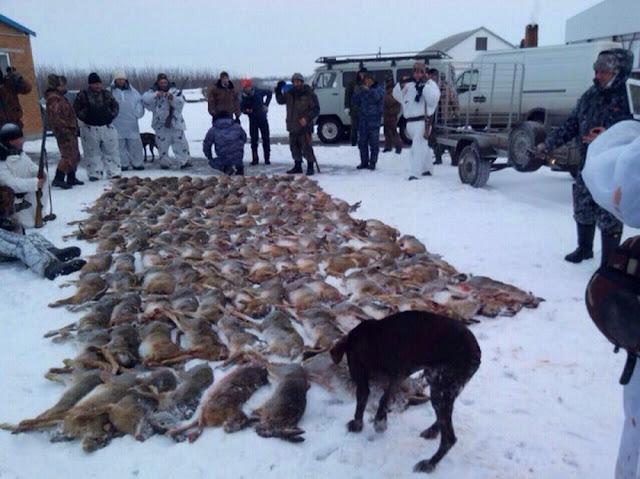 На Кубани браконьеры во время незаконной охоты отстреляли более 170 зайцев - никак не нажрутся...