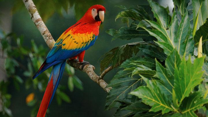 parrot breeders near me