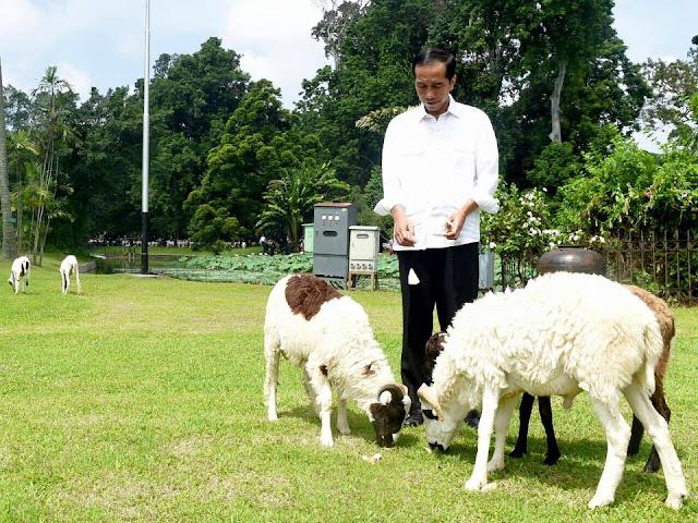 Jokowi Sebut Dakwah Bukan Memukul, Aktivis: Presiden juga Harus Membina Bukan Mengadu Domba