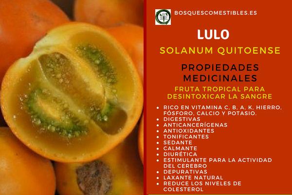 Lulo, Solanum quitoense, tiene propiedades que ayudan a desintoxicar la sangre.