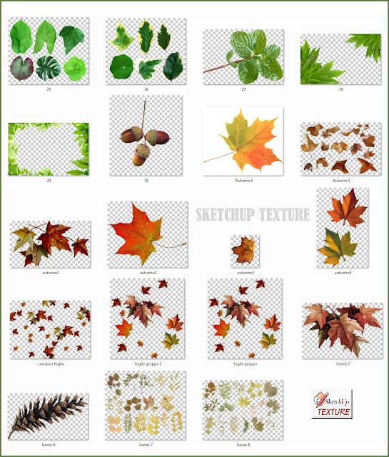 leaves png collection #2
