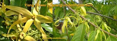 Beauty tips use magnolia flower