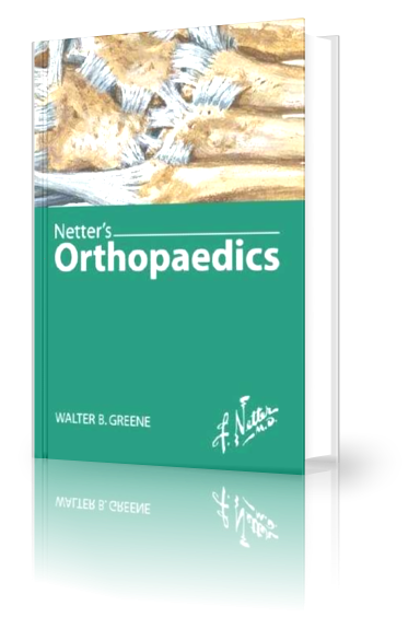 Netters Concise Orthopaedic Anatomy Pdf