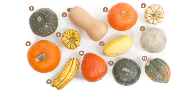 six squash and pumpkin recipes