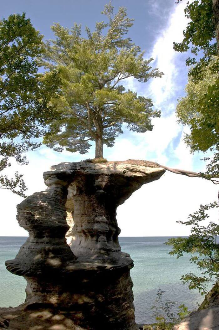 17 Pictures Of Trees That Prove The Miracle Of Life - Tree Roots Extend Across A Gap To The Mainland For Nutrients