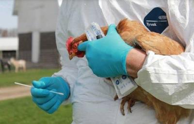 Bird flu  in China