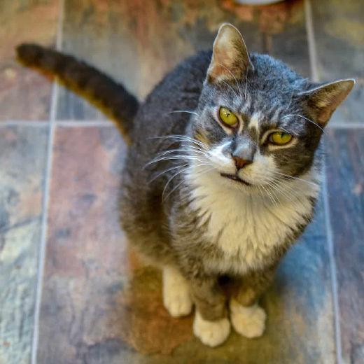 Tabby's Place A Cat Sanctuary