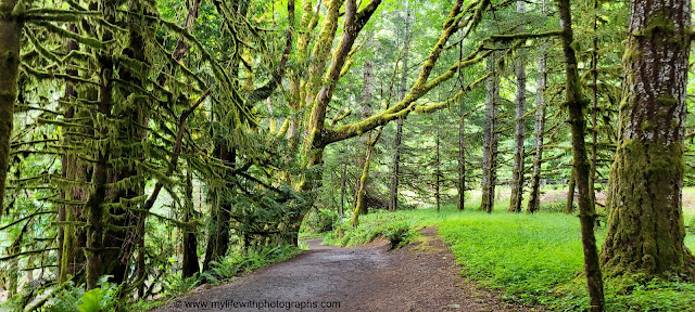 Beautiful tress and trails going to Marymere Falls
