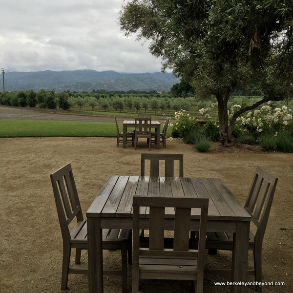 picnic area at Séka Hills Olive Mill and Tasting Room in Brooks, in theCapay Valley of California