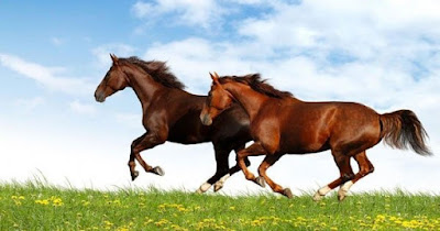 تفسير حلم الحصان في المنام لكبار شيوخ تفسير الأحلام