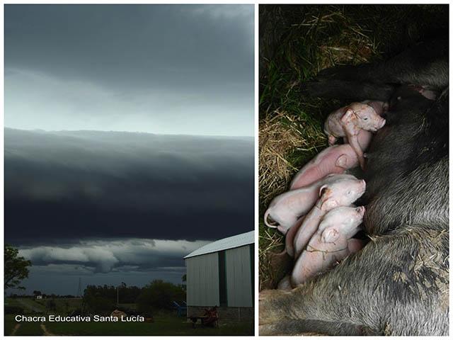 Nubes de tormenta/ Cerda amamantando a sus crìas -Chacra Educativa Santa Luciía
