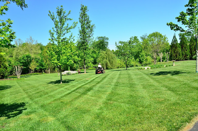 A Step By Step Guide To Proper Lawn Care