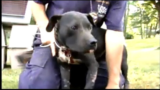 A Brief Overview of Hawaii's Dog Fighting Laws
