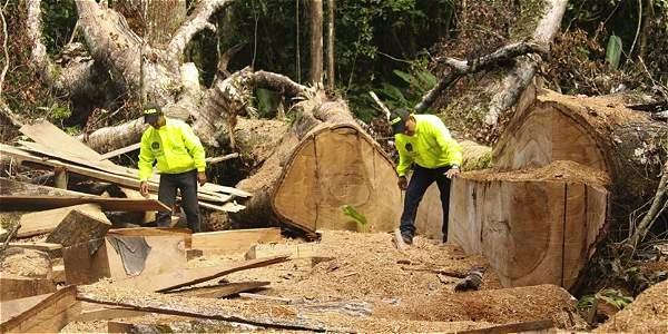 tala-ilegal-colombia