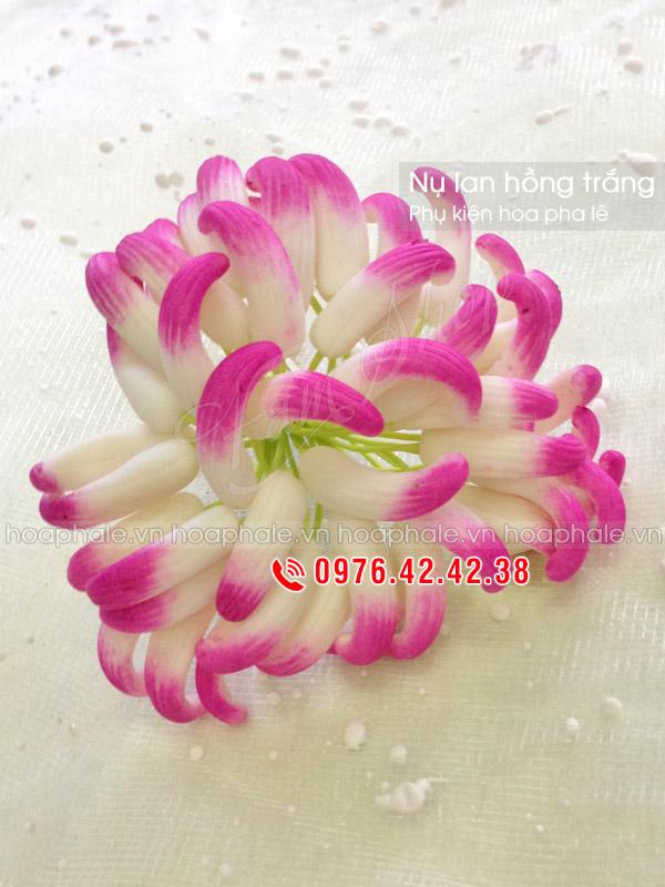 Nụ lan đất | Nụ hoa pha lê