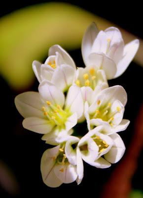 Flores blancas en la Hoz de Carboneros