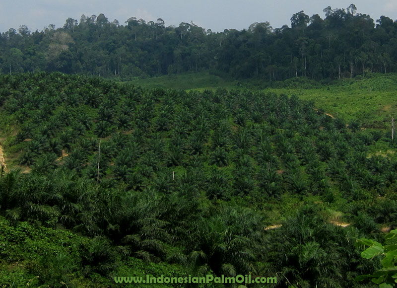 RSPO Roundtable on Sustainable Palm Oil