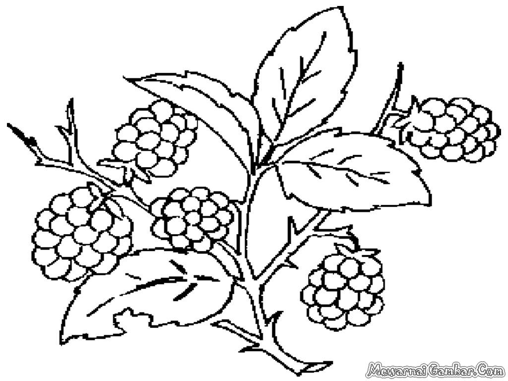 Kumpulan Gambar Sketsa Pohon Anggur Aliransket