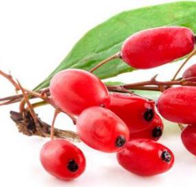 Kandungan Dan Manfaat Goji Berry Untuk Kesehatan