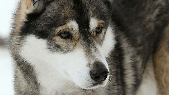 New Dog Health and Care Articles