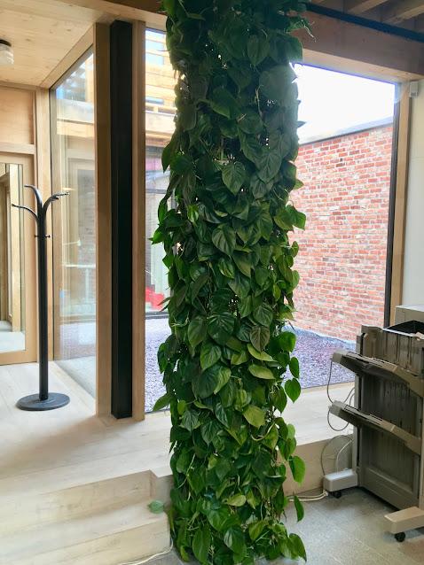 Grote groene klimplanten voor binnen of buiten soorten events kantoor prijzen tuin horeca huwelijk feest bedrijf beurs antwerpen