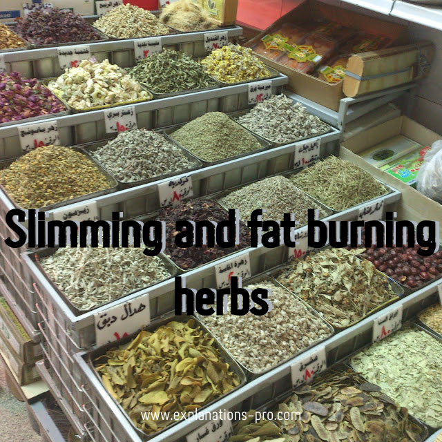 Slimming and fat burning herbs