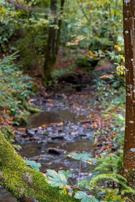 Wildwiesenweg – Eitorf | Wandern in der Naturregion-Sieg | Erlebniswege Sieg 06