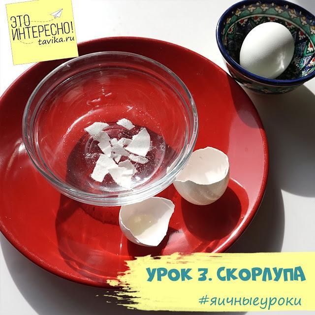 яичная скорлупа - занятие для детей
