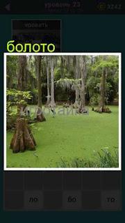 изображение болота с торчащими пнями 23 уровень 667 слов