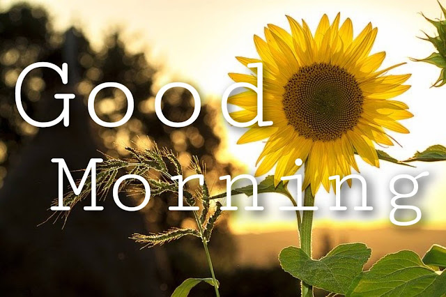good morning images with sunflower