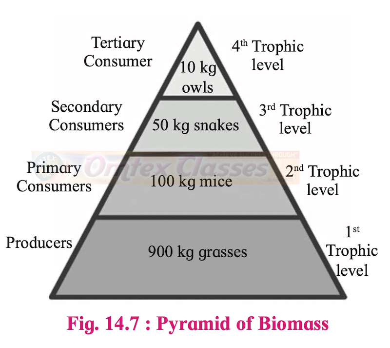 Chapter 14: Ecosystems and Energy Flow Balbharati Solutions for Biology 12th Standard HSC Maharashtra State Board