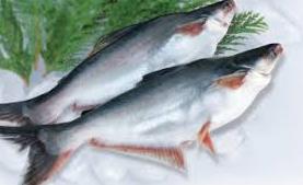 Cara Mengolah Ikan Patin yang Benar