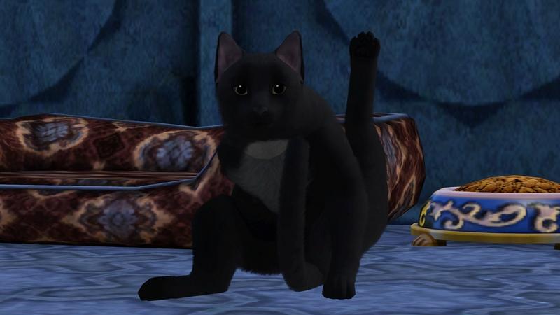 Miau1.jpg