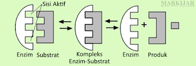Lock and Key Theory (Teori Gembok dan Kunci)