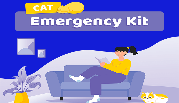 Cat Emergency Kit #infographic