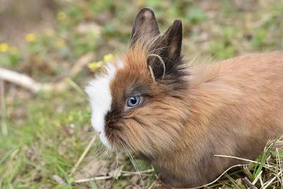 Kelinci yang Cantik