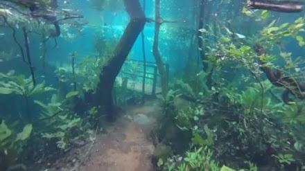 Ένα τροπικό δάσος βυθισμένο κάτω από το νερό (video)