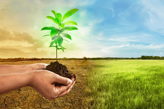 Two hands holding a plant in black dirt. In the background is a field-on the left it is brown and on the right it is green.