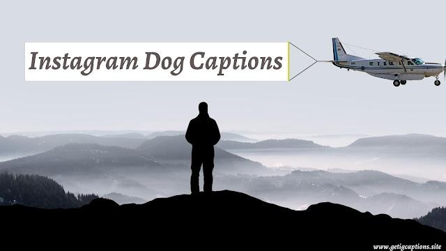 Dog Captions,Instagram Dog Captions,Dog Captions For Instagram