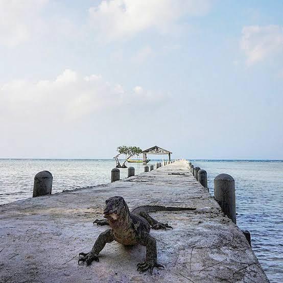 Hunting foto biawak jadi lebih seru di Pulau biawak Indramayu