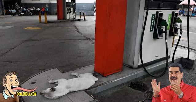 El propio miserable de Maduro asegura que queda gasolina solo para 30 días