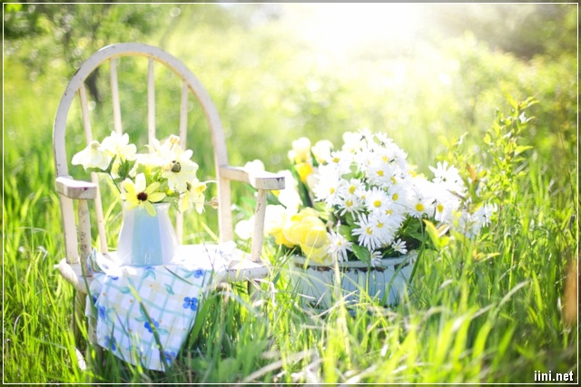 ảnh giỏ hoa và cảnh đẹp
